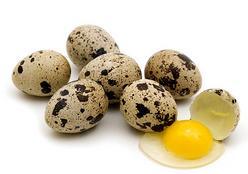 gizi telur puyuh