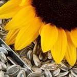 Manfaat vitamin E terhadap pertumbuhan anak