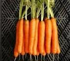 Pentingnya vitamin A bagi pertumbuhan anak