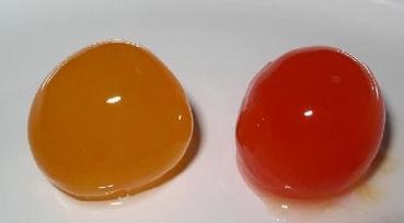Mana yang unggul, Telur bebek atau telur ayam