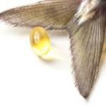 manfaat minyak ikan bagi kesehatn