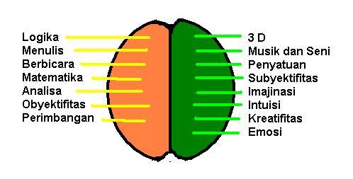 Perbedaan otak kiri dan otak kanan