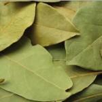 Manfaat daun salam - bay leaf bagi kesehatan